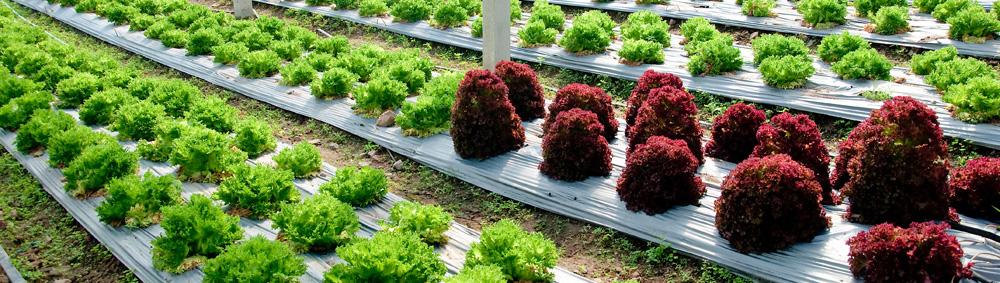 Greenbean_Scientific_010.jpg