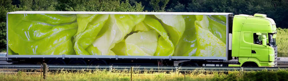 Greenbean_Scientific_014.jpg